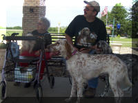 English Setter Therapy Dogs